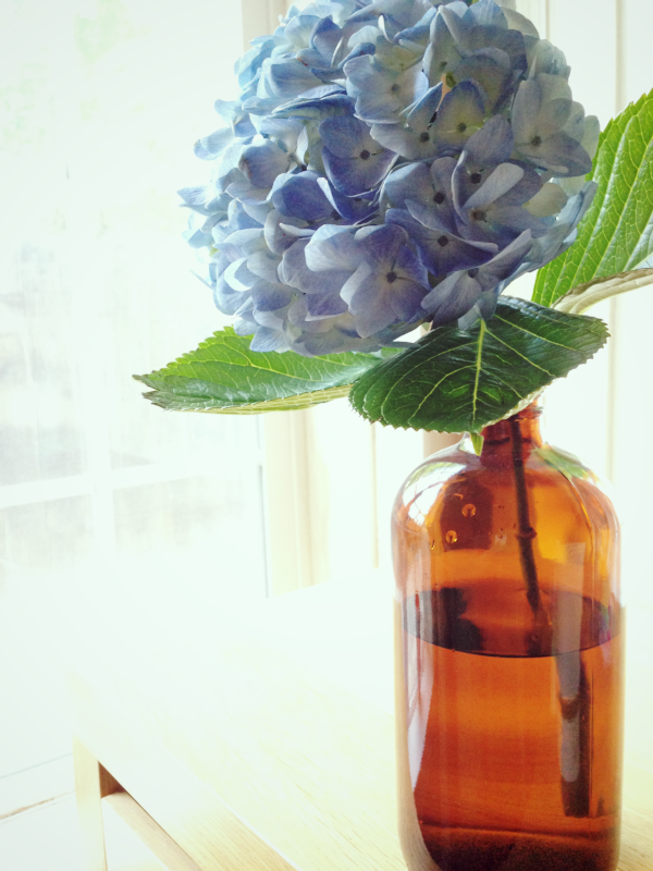 everyday treat - hydrangea