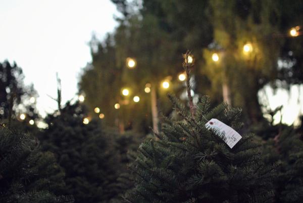 christmas tree lot and lights